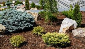 Het ontwerp van het landschap Struiken, rotsen Dwergsparren Bloemen stock fotografie