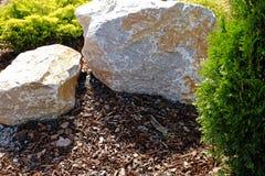 Het ontwerp van het landschap Struiken, rotsen Dwergsparren Bloemen stock afbeelding