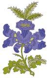 Het ontwerp van Paisley Royalty-vrije Stock Foto