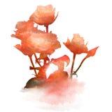 Het ontwerp van waterverfbloemen Stock Afbeeldingen