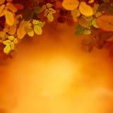 Het ontwerpachtergrond van de herfst Royalty-vrije Stock Foto
