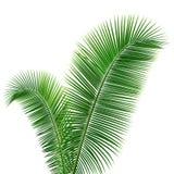 Het ontwerpachtergrond van kokosnotenbladeren Stock Foto