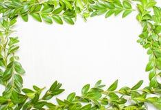 Het ontwerpen van groene bladeren, installaties Mening van hierboven Stock Foto's