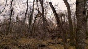Het onweer beschadigde bosbomen en logboeken bij verschillende hoeken Het langzame schot van de motiedia stock videobeelden