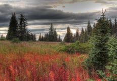 Het onweer van de daling in landelijk Alaska Royalty-vrije Stock Foto