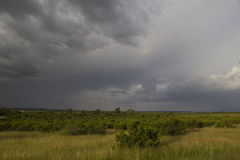 Het onweer van de savanne Stock Foto