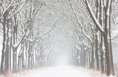 Het onweer van de sneeuw Royalty-vrije Stock Fotografie