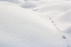 Het onweer van de sneeuw Royalty-vrije Stock Afbeeldingen
