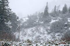 Het onweer van de sneeuw in de Alpen Royalty-vrije Stock Foto's