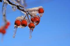 Het Onweer van de sneeuw en van het Ijs Royalty-vrije Stock Fotografie