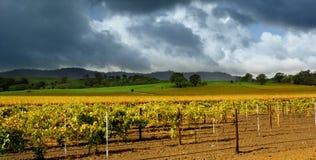 Het Onweer van de Wijngaard van de herfst Stock Afbeelding