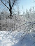 Het onweer van het ijs Royalty-vrije Stock Afbeeldingen