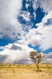 Het onweer van Kalahari Stock Afbeelding