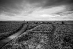 Het Onweer verdonkert alles Al Manier door het Eind van de Horizon die de Donkere Hemel en het Grasgebied onder het in Lang behan Royalty-vrije Stock Afbeelding