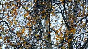 Het onweer windt Rotsboom met Kleurrijke Bladeren