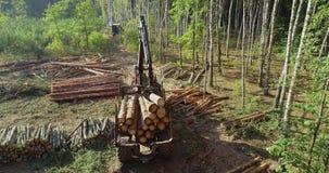 Het onwettige bos zweten, het stropen, kwaad aan het milieu, milieuverstoring stock video