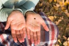 Het onzelieveheersbeestje is op de palm van het meisje Stock Fotografie