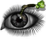 Het oog met een takje Stock Afbeelding