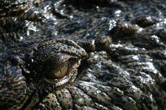 Het Oog van Crocodille Stock Foto