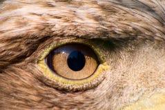 Het oog van de adelaar Royalty-vrije Stock Foto's
