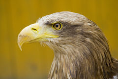 Het Oog van de adelaar - de bek van het Zand Stock Afbeeldingen