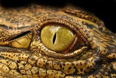 Het oog van de draak Stock Foto's