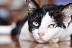 Het Oog van de kat Stock Afbeelding