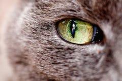 Het oog van de kat Stock Afbeeldingen