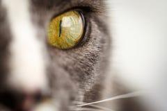 Het oog van de kat Stock Fotografie