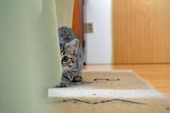 In het oog van de kat Stock Fotografie