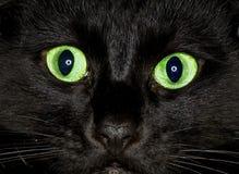 Het oog van de kat stock foto's