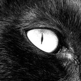 Het Oog van de kat Royalty-vrije Stock Afbeeldingen