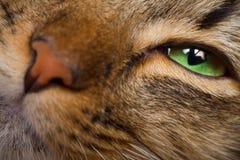 Het oog van de kat en neusclose-up Royalty-vrije Stock Afbeelding