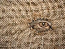 Het oog van de kat kijkt door een gat royalty-vrije stock fotografie