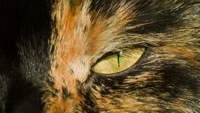 Het oog van de kat op zon stock videobeelden
