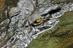 Het oog van de krokodil stock afbeelding