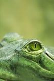 Het oog van de krokodil royalty-vrije stock foto