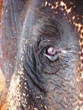 Het Oog van de olifant Royalty-vrije Stock Afbeelding
