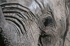 Het Oog van de olifant Royalty-vrije Stock Foto