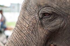 Het oog van de olifant Royalty-vrije Stock Foto's