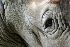 Het oog van de rinoceros Stock Foto