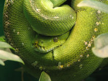 Het Oog van de slang Royalty-vrije Stock Afbeeldingen