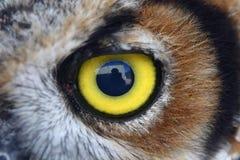 Het oog van de uil Stock Fotografie