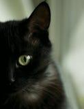 Het oog van de zwarte kat Stock Afbeeldingen