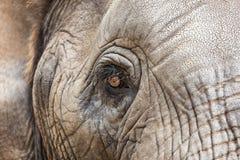 Het oog van een Afrikaanse Olifant Stock Foto's