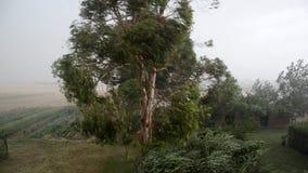 Het oog van een cycloon stock videobeelden