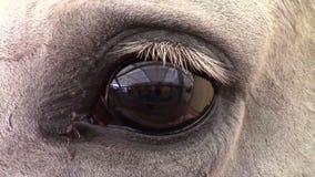 Het oog van het paard stock videobeelden