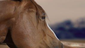 Het oog van het paard Stock Afbeeldingen