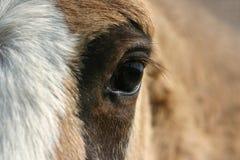 Het oog van het paard Royalty-vrije Stock Fotografie
