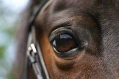 Het oog van het paard Stock Foto's
